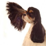 Trust Your Intuition - Image of Dog with Large Ear Listening