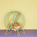 Ways to reduce stress shown by hamster running in a spinning wheel